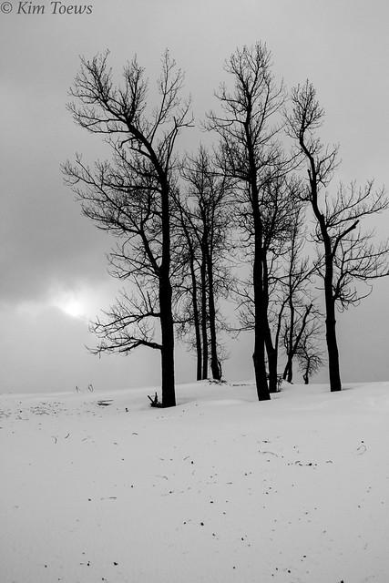 Snow On The Dunes - Prince Edward County, Ontario