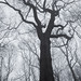 Mighty Tree by hayley-tansey