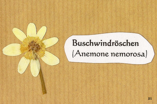 Mannheim Natur Kurpfalz Pflanze Wildpflanze blühen Blüte Foto Brigitte Stolle