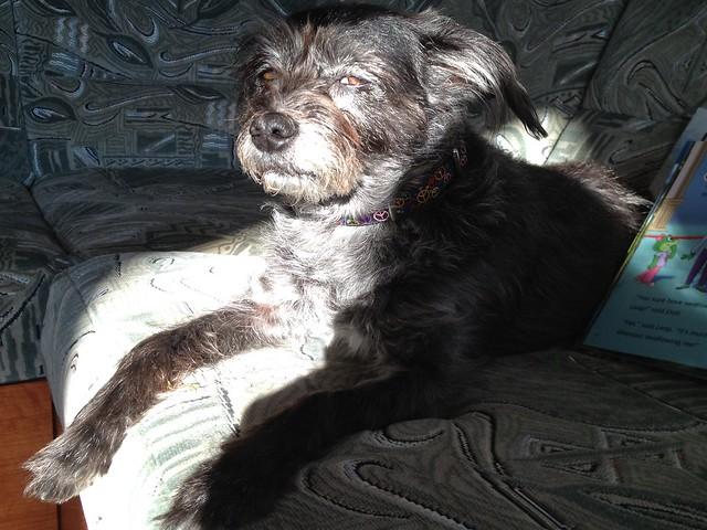 Yoda sunbath likes