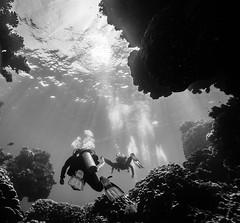 Claudia Reef شعاب كلاوديا