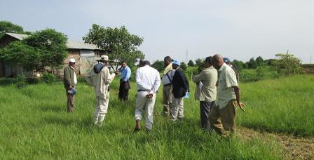 Regional Agricultural Research System DGs and LIVES team members visiting farmer 's field that are converted into improved irrigated fodder field