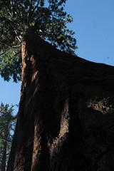 General Grant sequoia grove