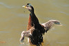 Mallard Duckling 15-0604-4934 by digitalmarbles