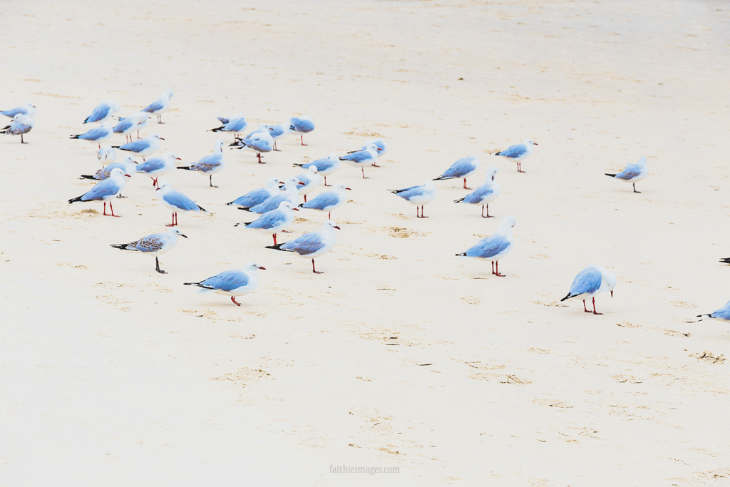 A flock of seagulls on the beach