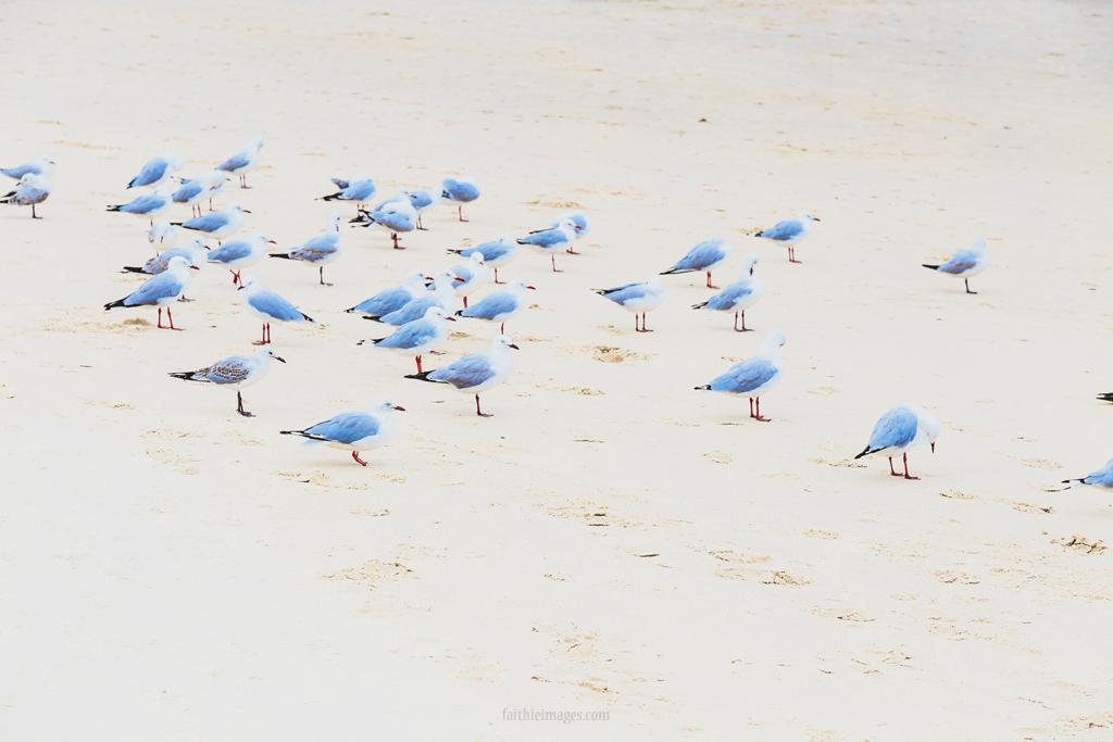 A flock of seagulls on the beach