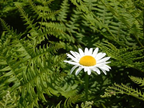 Eastern Shore - bloem
