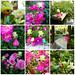 flower fairies by hruki_hru