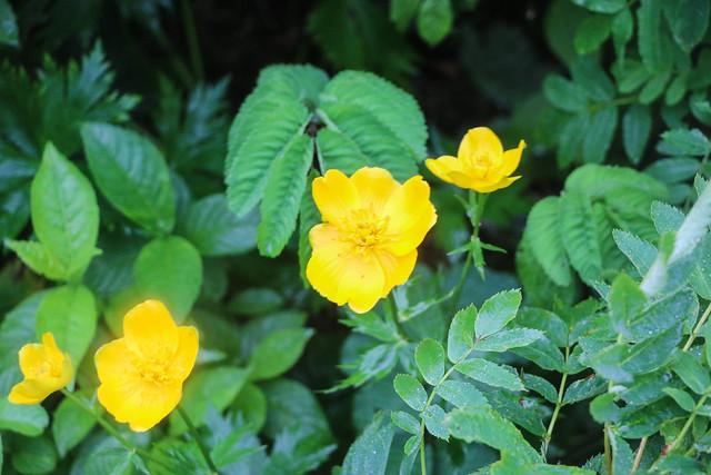 2014-07-21_01798_北海道登山旅行.jpg