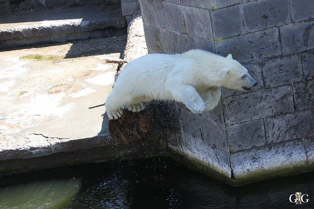 Ausflug Zoo Rostock 11.07.201540
