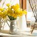 Daffodils in Sunny Kitchen Windowsill by goingslowly