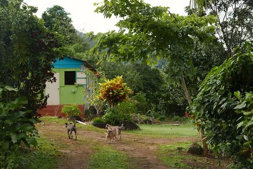 Louisette & Nanichi Airbnb, Kalinago Territory, Dominica.