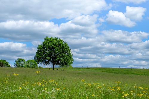 L'arbre #2