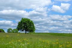 L'arbre #2 - Photo of Clermont-d'Excideuil