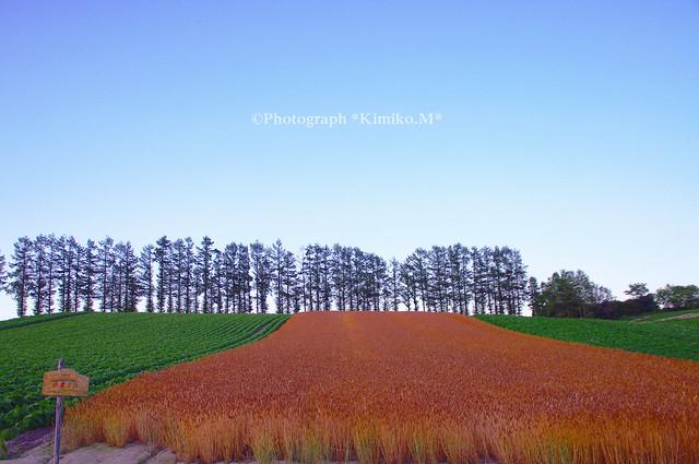 2015赤麦の丘