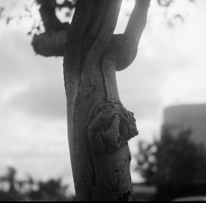 Tree Detail, North Park, San Diego