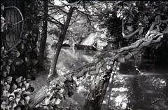 Les bords de l'Eure à Pontgouin