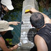 UH Manoa students learn how to document, clean and perform repairs on aging and damaged gravestones