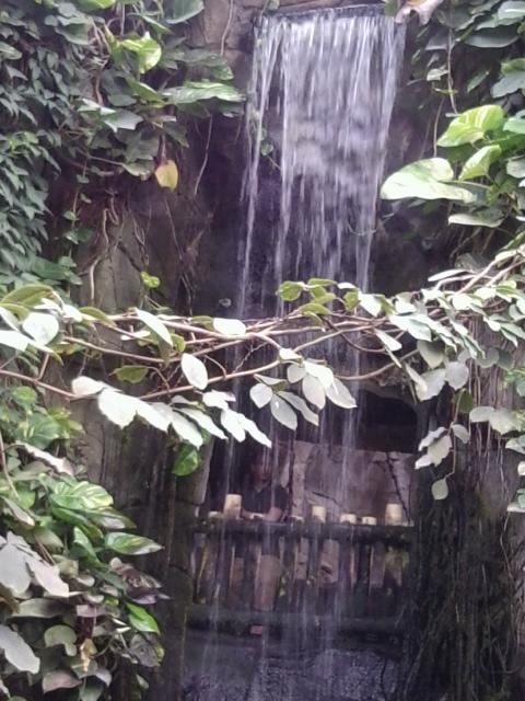 herrlicher Wasserfall im Tropenhaus