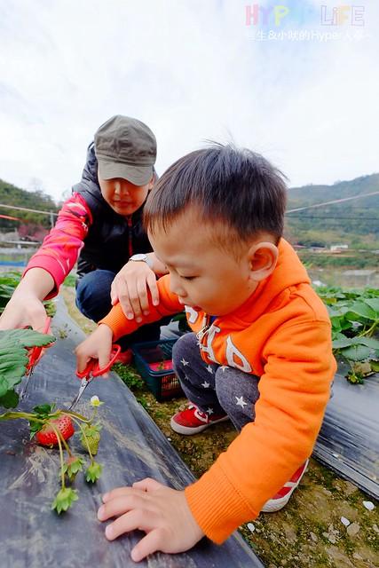 劉正男高冷草莓園 (4)