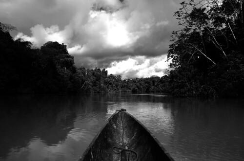 amazonie rio tiputini napo