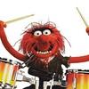 Animal #animal #muppets