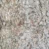 #Bark #texture