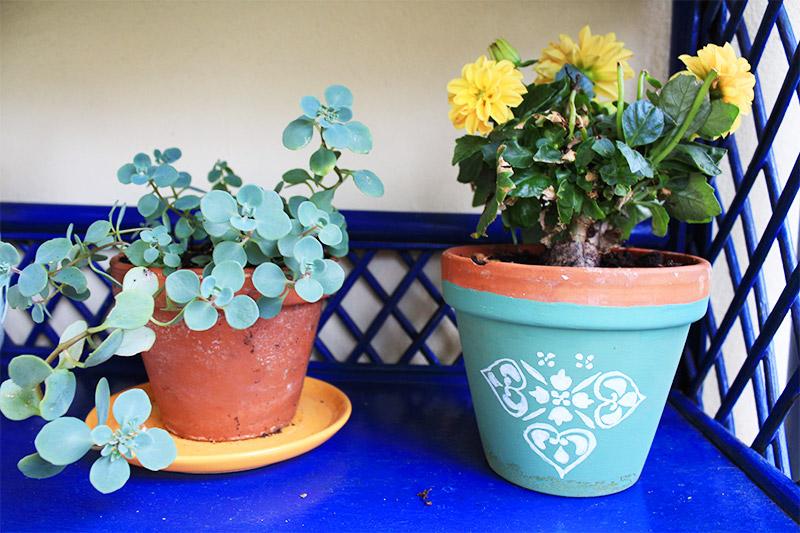 Sukkulente und Aster in einem selbst bemalten Blumentopf