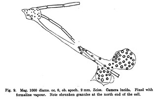 Fig. 9 from W.B. Hardy , 'Further Observations upon the Action of the Oxyphil and Hyaline Cells of Frog's Lymph upon Bacilli', Journal of Physiology 23 (5) (1898), pp. 359-375.