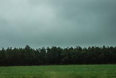 46-Forêt de pins - Photo of Le Barp