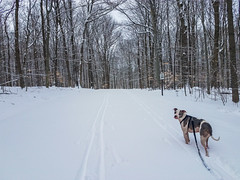 walking with Juneau in Chapin Forest
