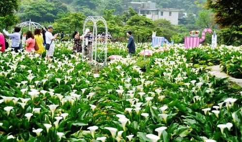 188 Comida y paseo entre flores en Taipei (4)