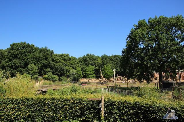 Ouwehands Dierenpark Rhenen 01.07.2015  061