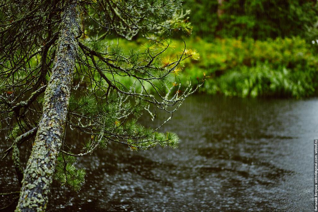 Реки сибири. Черная.