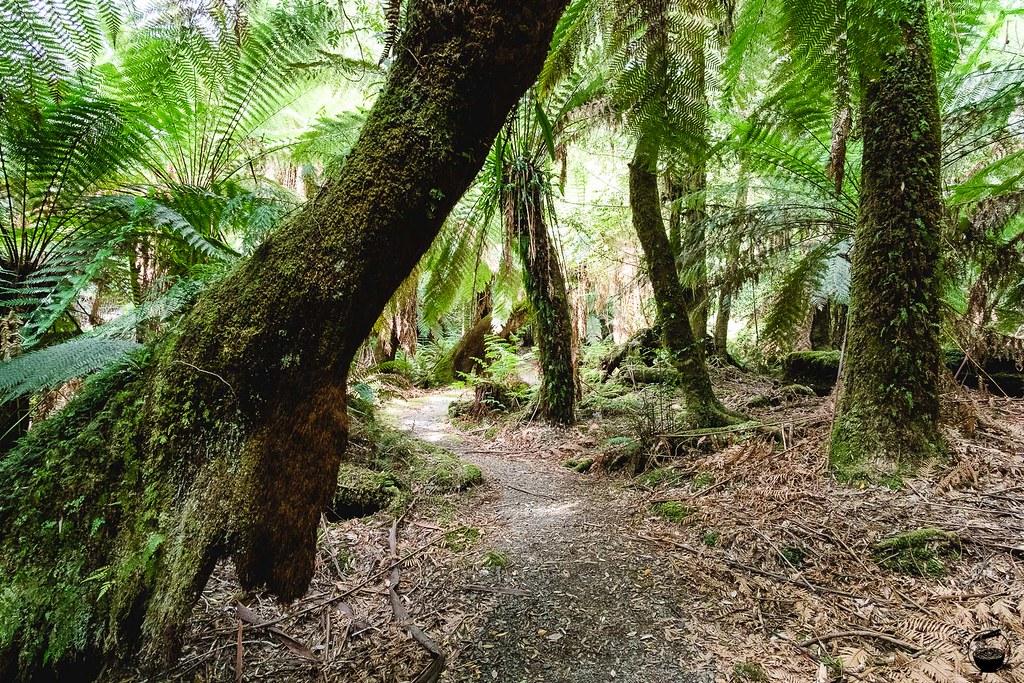 Tasmania 2016-104