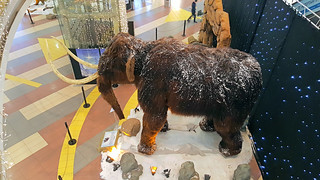 Wooly Mammoth (20170105_170301 1PS)
