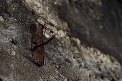 AN OLD NAIL 古釘