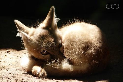 Cute look!