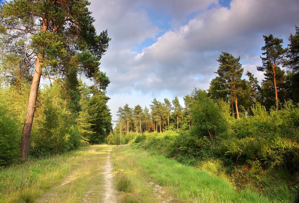 High Weald Forest