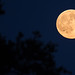 Full Moon (201507310004HQ) by NASA HQ PHOTO