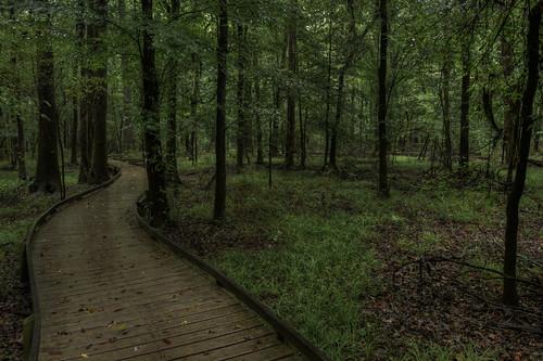 green sc nature forest landscape nationalpark nikon unitedstates outdoor hiking interior southcarolina d750 boardwalk hdr hopkins hikingtrail congaree landscapephotography 1635mm visitsc