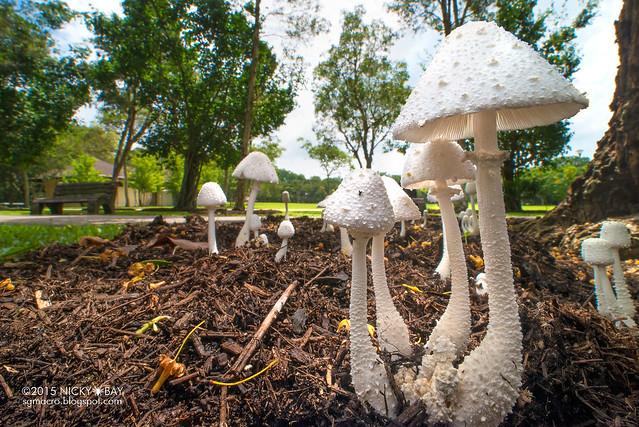 Fungi - DSC_3634