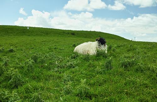 ireland sigma sheeps foveon dp2m rathcroghanmound