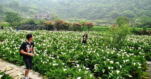 189 Comida y paseo entre flores en Taipei (5)