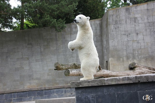 Ausflug Zoo Rostock 11.07.201592