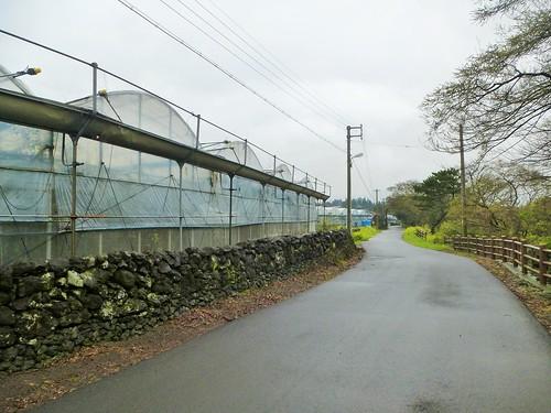 Co-Jejudo-Seogwipo-Sentier Olle 9 (7)