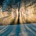 La nature en connaît un rayon pour nous séduire. by Valentin le luron