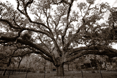 newyearseve savannah georgia us tree oak ancient monochrome blackandwhite sepia landscape dorameulman beautiful goodbyeoldyear