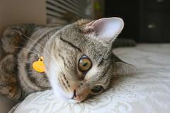 猫 A cat named Archer