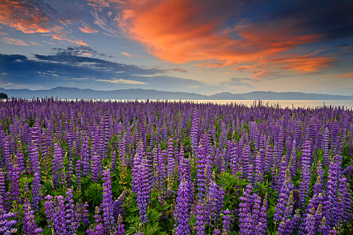 california light summer lake mountains color clouds sunrise landscape nikon purple laketahoe explore wildflowers lupine easternsierras keeptahoeblue explored